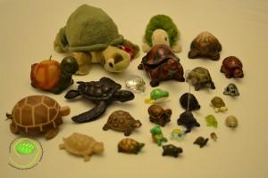 collection de tortues