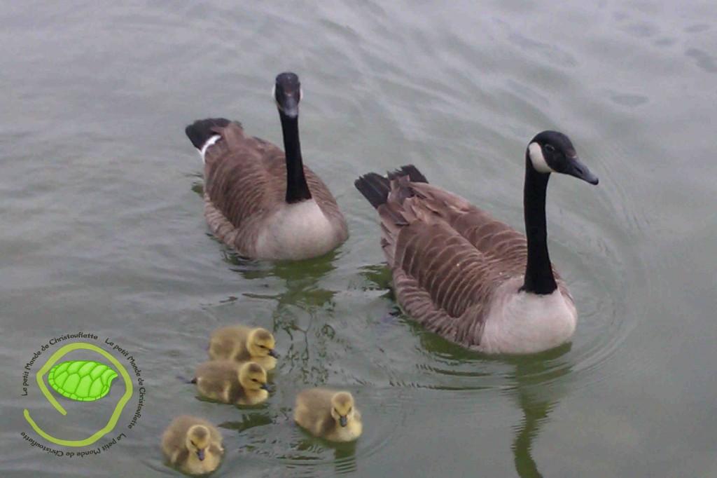 La mère, le père et les 4 petits ! C'est trop mignon !
