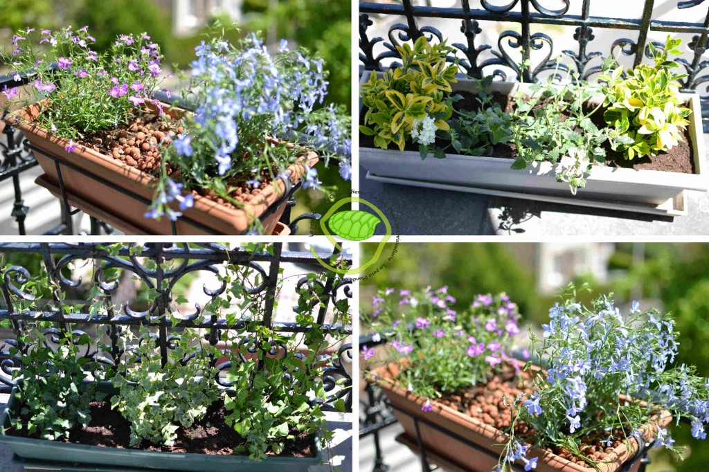 Avec des plantes vivaces, à feuillages avec ou sans fleurs