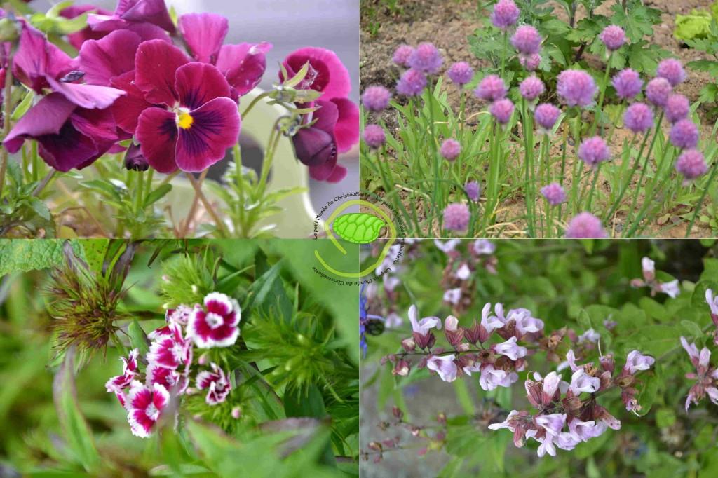 Pensée, fleurs de ciboulette, bouquet tout fait et fleurs de sauge ...