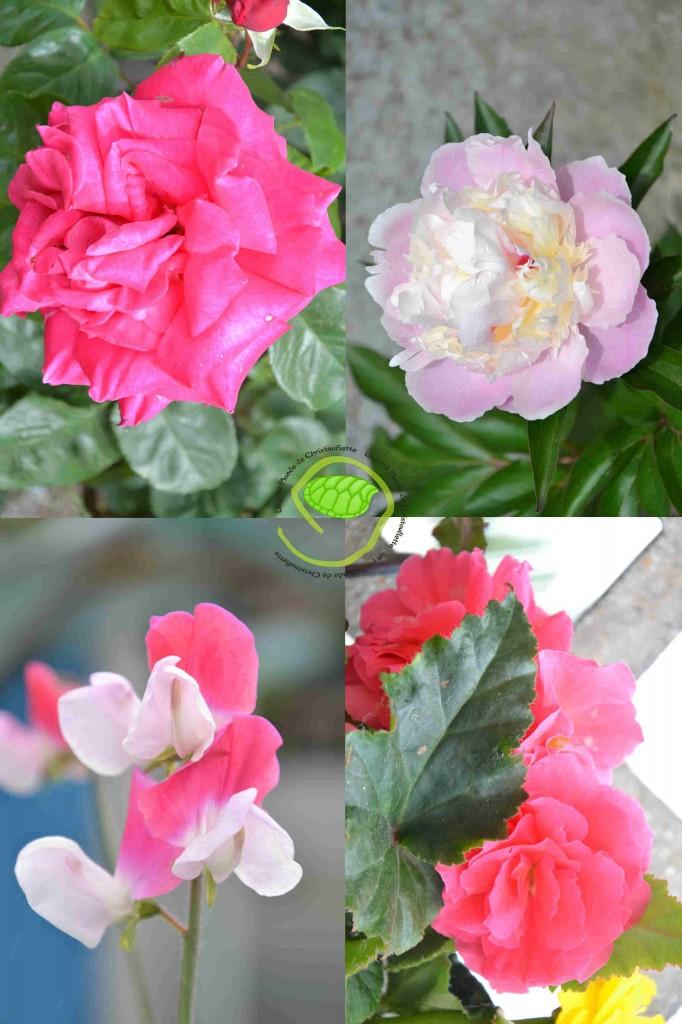 Rose, pivoine, pois de senteur et bégonia ...