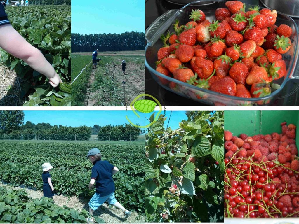 Les petites cherhent les fraises ! Les petits pieds cherchent les carottes ! Et voici notre récolte de fraises, framboises et groseilles !