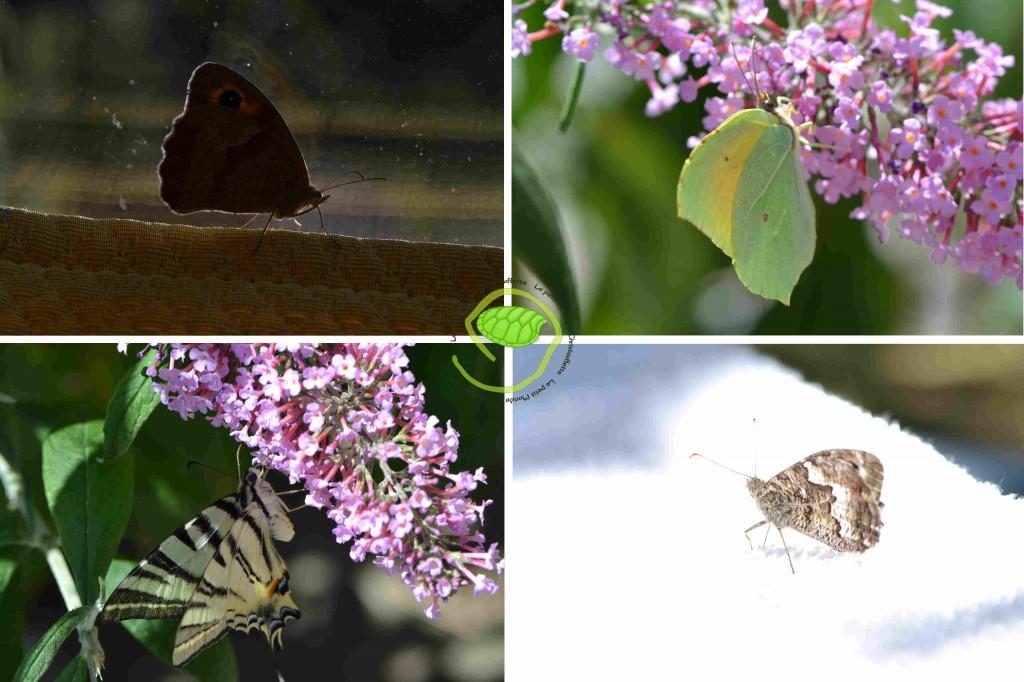 Je vous épargne les noms savants de tous ces papillons ... car je ne les connais pas !