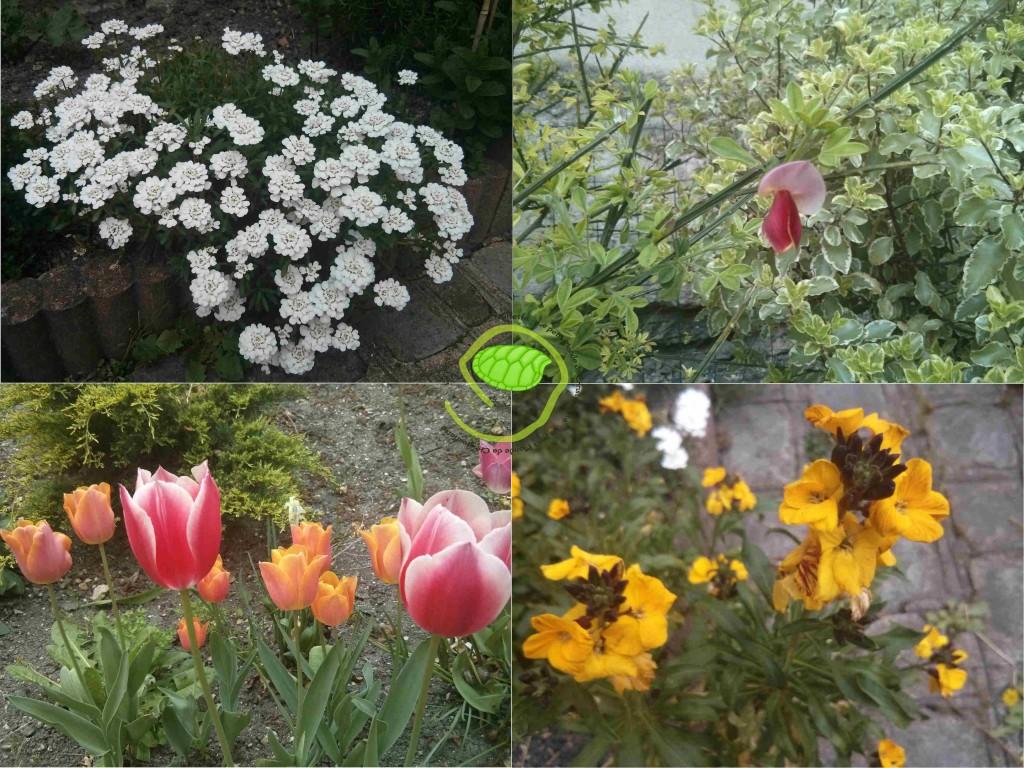 Les petites fleurs du jardin