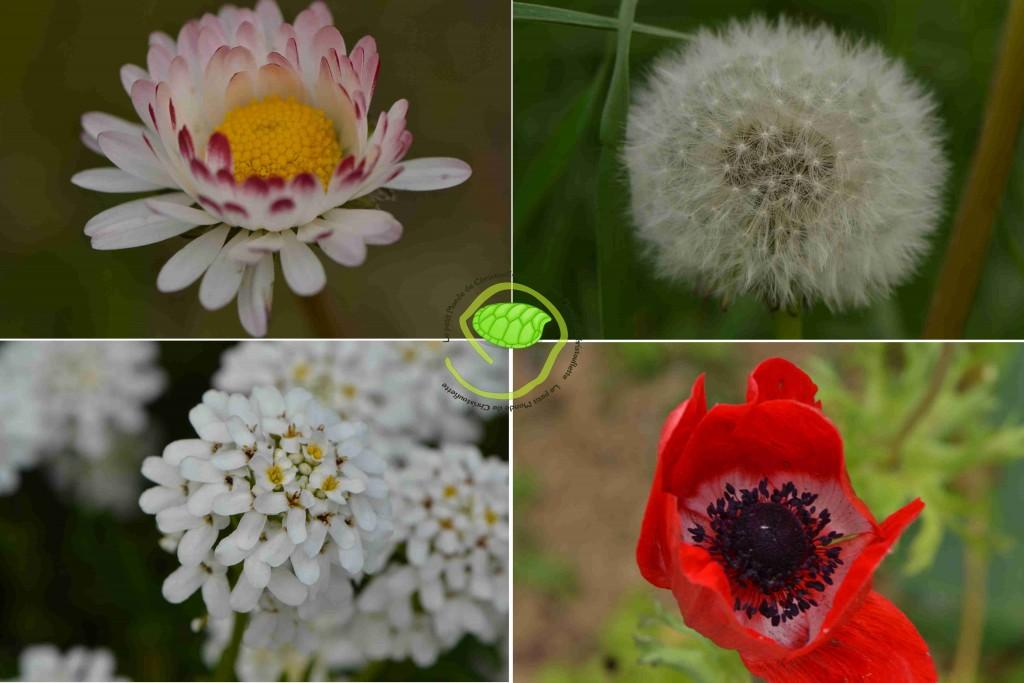zoom sur quelques fleurs !