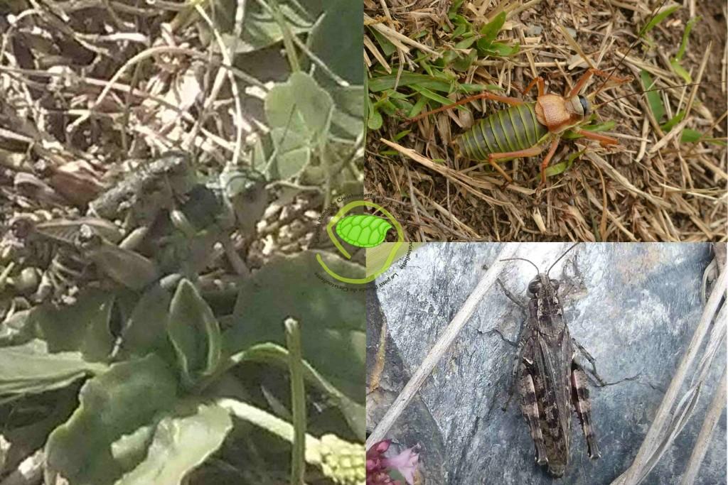 Des insectes sauteurs