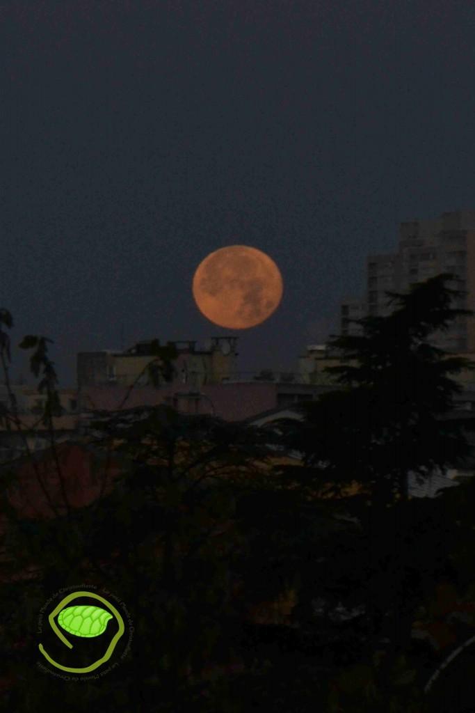 Une belle lune