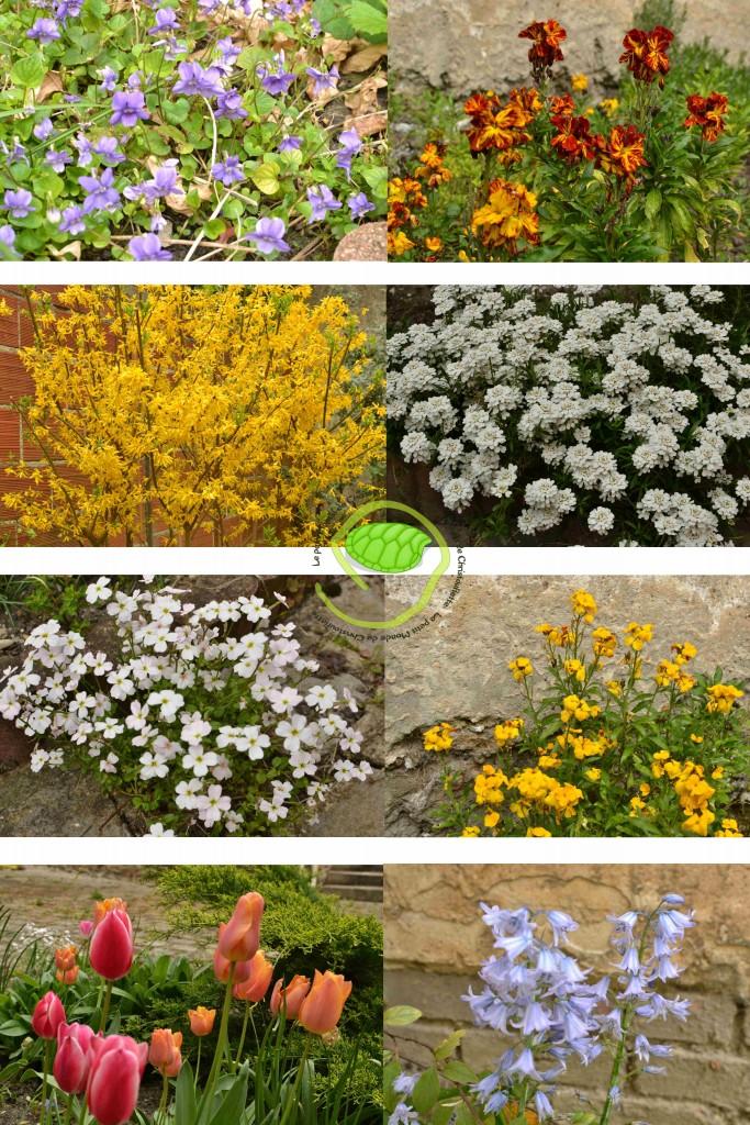 des fleurs pour d'autres fleurs