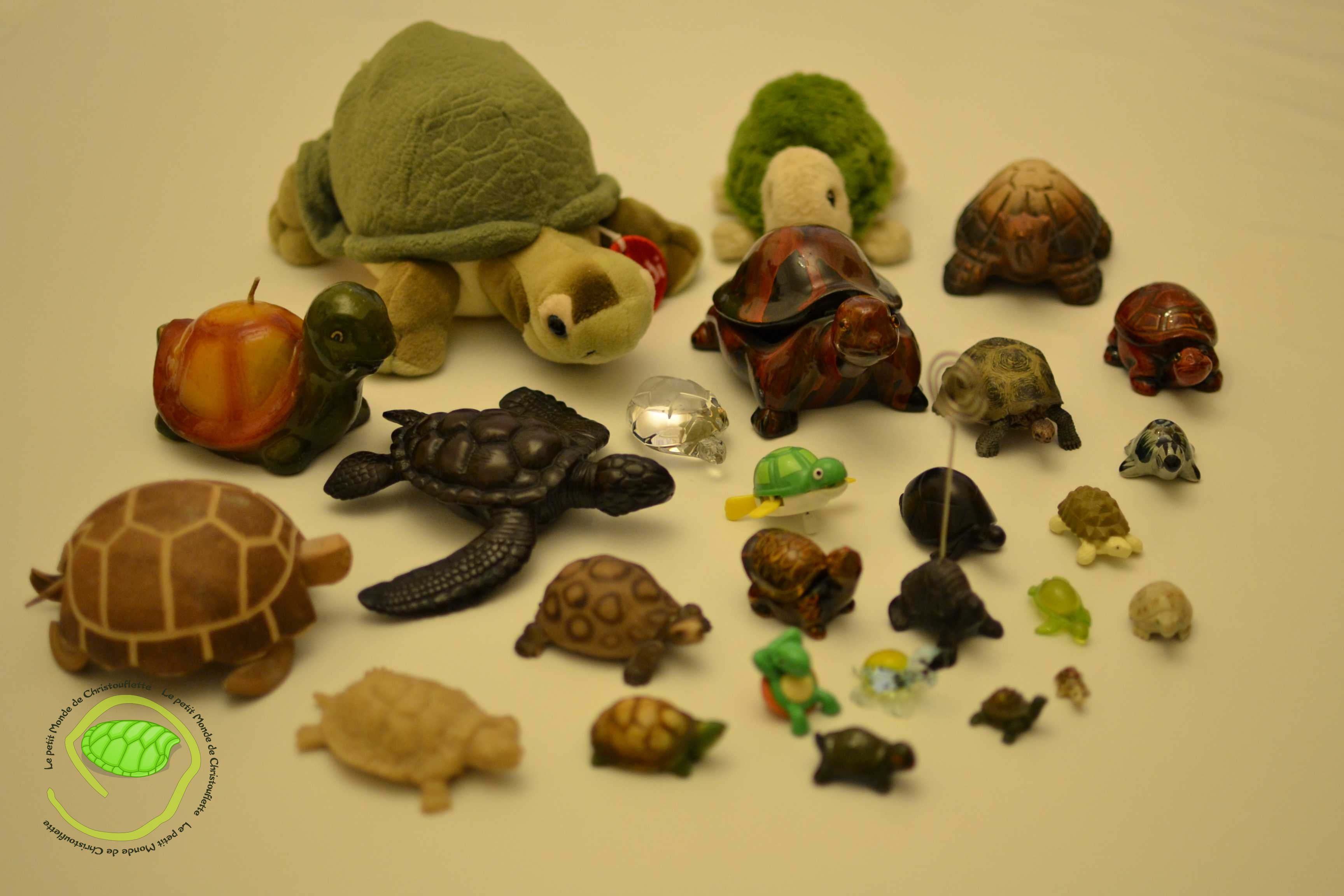 collection de tortues